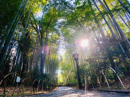 竹林の小径|自然と足湯が最高の癒やし空間!修善寺に嫉妬するわたし